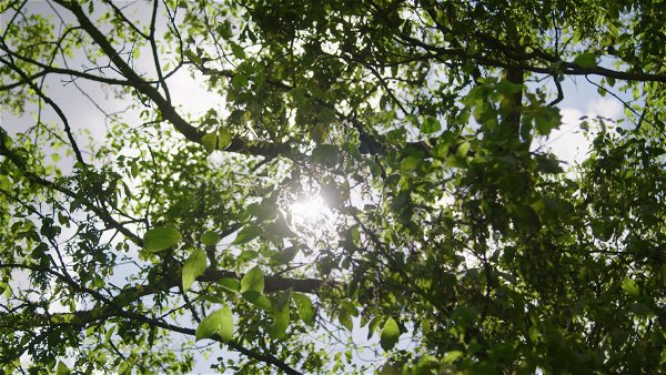 Sunlight rays through trees.mp4